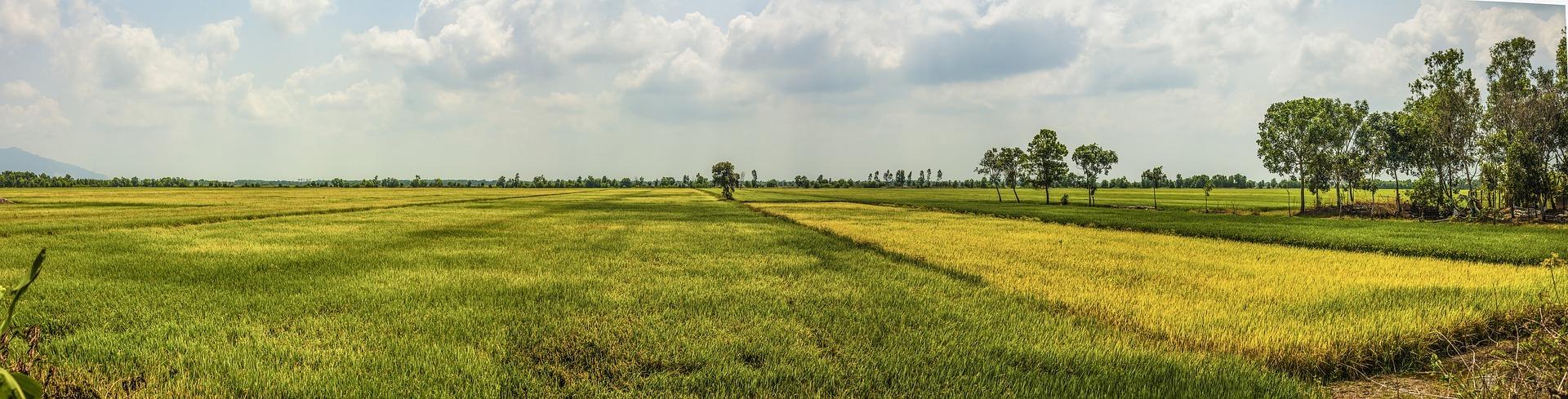 Mekong-deltaet